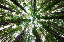 Maleno Adventure Woods Coming Soon!